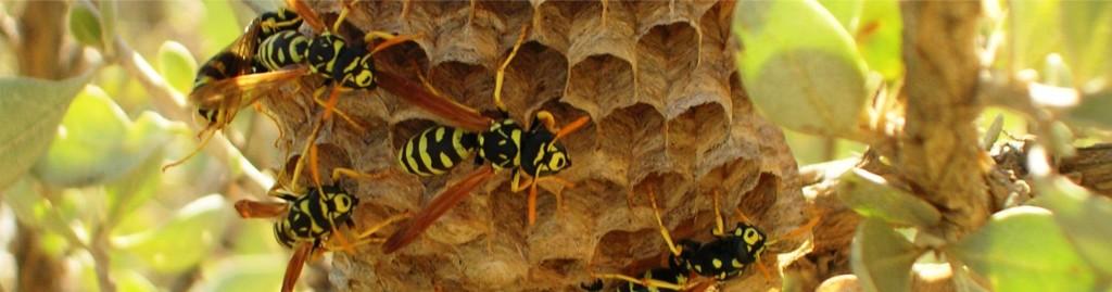 banner nido di vespe