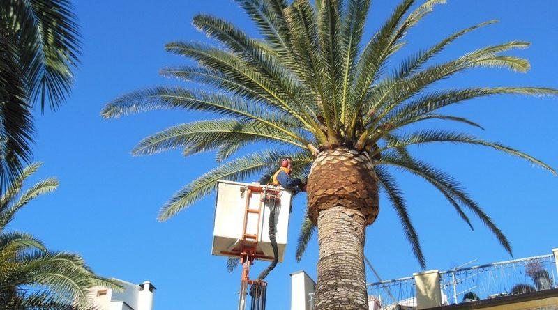 Potatura ed abbattimento palme
