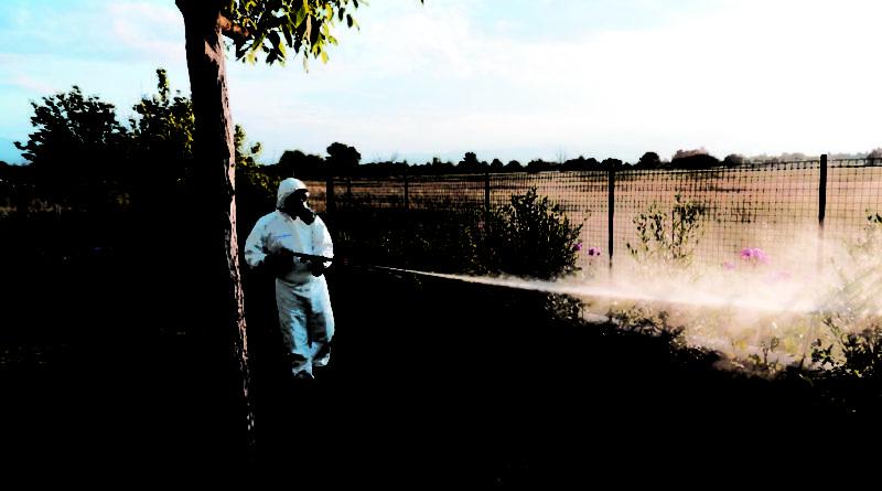 Disinfestazione Zanzare e insetti volanti